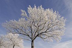 Bomen met rijp in Hilter, Duitsland stock afbeeldingen