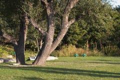 Bomen met schaduw Royalty-vrije Stock Afbeelding