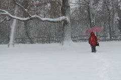 Bomen met sneeuw Royalty-vrije Stock Afbeelding
