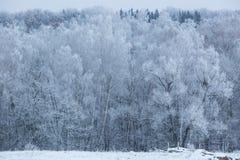 Bomen met sneeuw in de winterpark Royalty-vrije Stock Foto