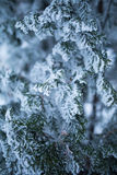 Bomen met sneeuw in de winterpark Royalty-vrije Stock Afbeeldingen