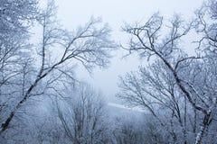 Bomen met sneeuw in de winterpark Stock Foto's