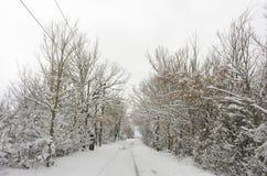 Bomen met sneeuw en een bewolkte hemel op achtergrond Royalty-vrije Stock Fotografie
