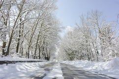 Bomen met sneeuw en een blauwe hemel op achtergrond Royalty-vrije Stock Foto's