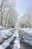 Bomen met sneeuw en een blauwe hemel op achtergrond Stock Afbeeldingen