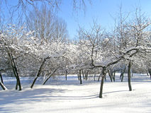 Bomen met sneeuw en ijs worden behandeld dat Royalty-vrije Stock Fotografie