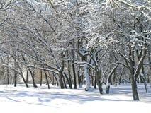 Bomen met sneeuw en ijs worden behandeld dat Stock Foto's