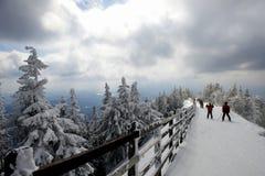 Bomen met sneeuw en skiërs op achtergrond worden behandeld die stock afbeeldingen