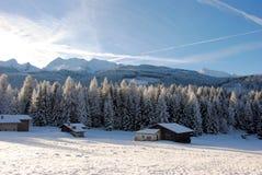 Bomen met Sneeuw in het Italiaanse Dolomiet worden behandeld dat Stock Afbeelding