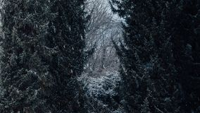 Bomen met sneeuw op het stock fotografie