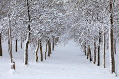Bomen met sneeuw worden behandeld die Royalty-vrije Stock Fotografie