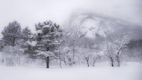 Bomen met sneeuw worden behandeld die Royalty-vrije Stock Foto's