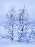 Bomen met sneeuw worden behandeld die Stock Afbeelding