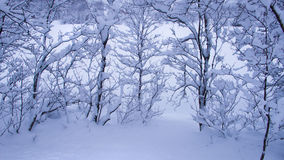 Bomen met sneeuw worden behandeld die Stock Fotografie