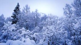 Bomen met sneeuw worden behandeld die Stock Foto