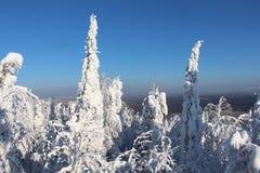 Bomen met sneeuw in Zonnig weer worden behandeld dat Stock Fotografie