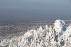 Bomen met sneeuw in Zonnig weer worden behandeld dat Stock Foto's