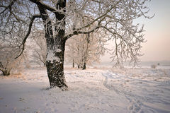 Bomen met snow-covered takken, door de zon worden aangestoken die. Stock Foto's