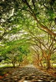 Bomen met takken Stock Foto's
