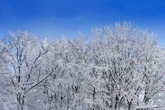 Bomen met takkenhoogtepunt van sneeuwwhit blauwe hemel Royalty-vrije Stock Afbeeldingen