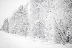 Bomen met veel sneeuw worden behandeld die royalty-vrije stock fotografie