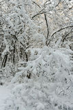 Bomen met verse sneeuw een rommel van die worden gemaakt van die Stock Foto's