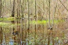 Bomen met water worden overstroomd dat Stock Foto