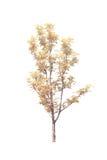 Bomen met witte achtergrond worden geïsoleerd die Royalty-vrije Stock Afbeeldingen