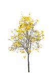 Bomen met witte achtergrond worden geïsoleerd die Royalty-vrije Stock Fotografie