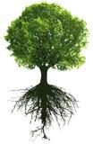 Bomen met wortels Royalty-vrije Stock Afbeeldingen
