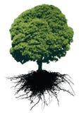 Bomen met wortels Royalty-vrije Stock Foto