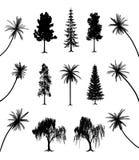 Bomen met wortels en palmen royalty-vrije illustratie