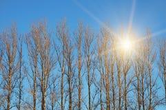 Bomen met zonstraal Stock Afbeeldingen