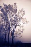 Bomen in mist royalty-vrije stock fotografie