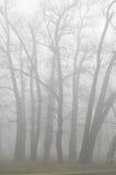 Bomen in mist Stock Afbeeldingen
