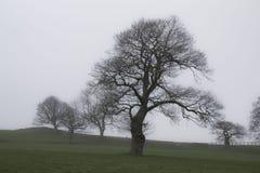 Bomen in mist Stock Fotografie