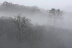 Bomen in mist Stock Afbeelding