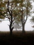 Bomen in mist 2 stock afbeeldingen