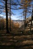 Bomen in Mongools nationaal park royalty-vrije stock foto's