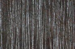 Bomen na blizzard Stock Fotografie