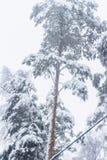 Bomen na een zware sneeuwval stock afbeelding