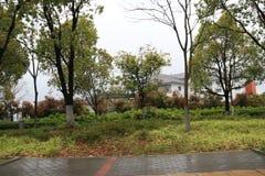 Bomen na regen stock foto