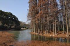 Bomen naast de rivier stock afbeeldingen