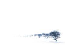 Bomen in nevelige nevel royalty-vrije stock foto's