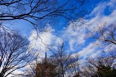 Bomen onder blauwe hemel bij zonnige dag royalty-vrije stock foto's