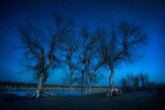 Bomen onder nachthemel in de woestijn royalty-vrije stock foto