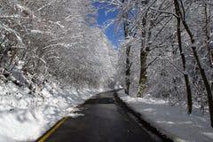 Bomen onder sneeuw Royalty-vrije Stock Afbeelding