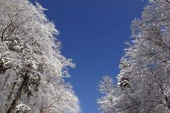 Bomen onder sneeuw Royalty-vrije Stock Afbeeldingen