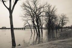Bomen onderwater van vloed Stock Foto
