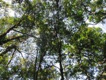 Bomen onze Reddingslijn royalty-vrije stock foto